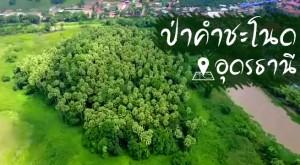 ป่าคำชะโนด-อุดรธานี